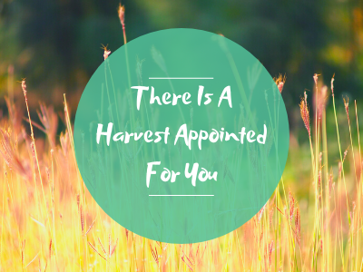There Is A Harvest Appointed For You